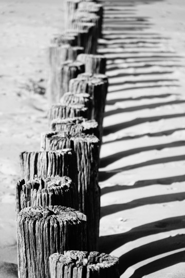 Old weathered wooden groynes in Northern France
